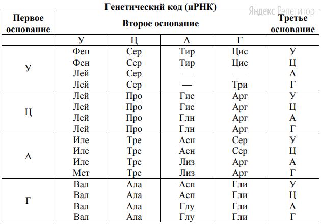 Для решения задания используйте таблицу генетического кода.