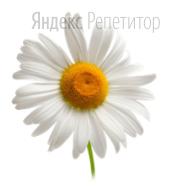 Укажите признаки, характерные для изображённой на рисунке части растения.
