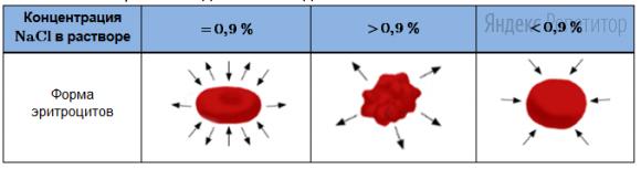 Проанализируйте таблицу «Форма эритроцитов в зависимости от концентрации поваренной соли ... в растворе». Стрелками в данном случае обозначено направление движения воды.
