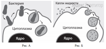 Какие процессы изображены на рисунках А и Б?