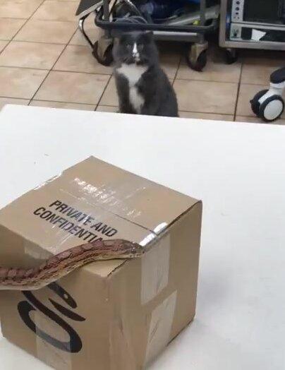 Кот в шоке увидев змею. Видео прикол