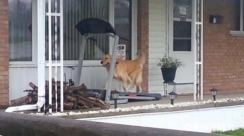 Когда на улице идет дождь, а собаке пора погулять. Видео прикол