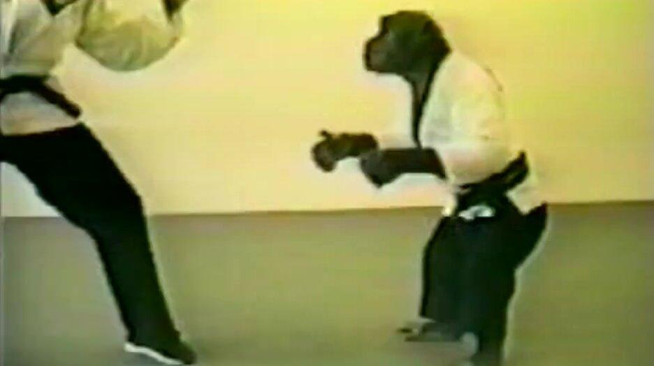 Шимпанзе каратист. Видео прикол