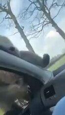 Веселая обезьянка. Видео прикол