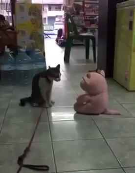 Кот атакует плюшевую игрушку. Видео прикол