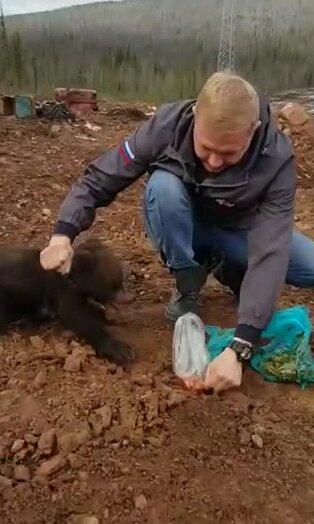 Парень пытается накормить медвежонка. Видео прикол