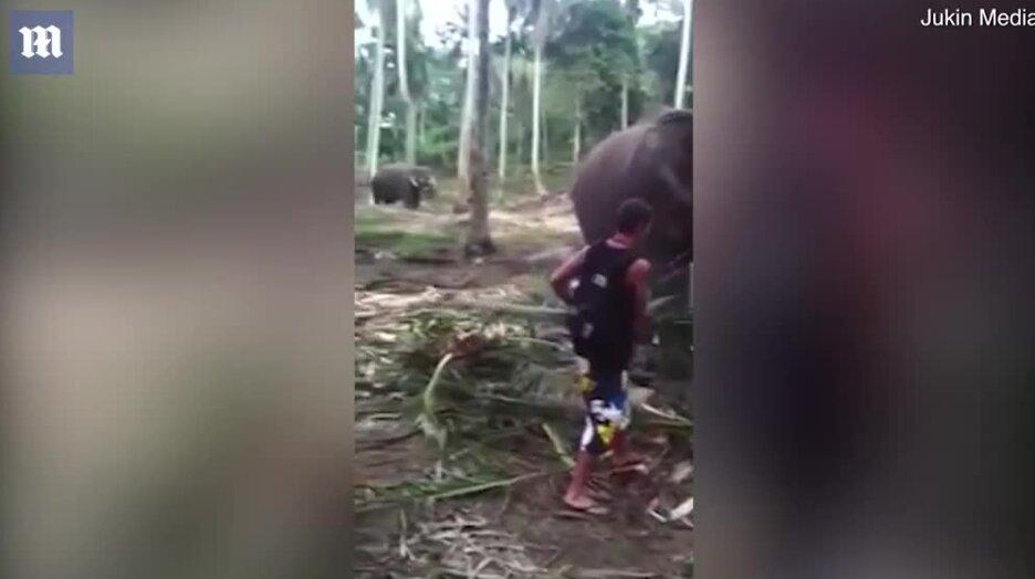 Когда покормил слона и решил его погладить. Видео прикол