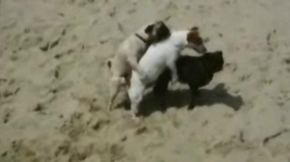 Собачья пляжная вечеринка. Видео прикол