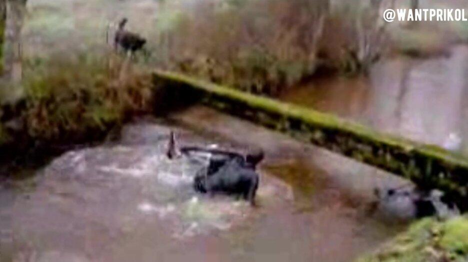 Решил проехать по бревну через реку. Видео прикол