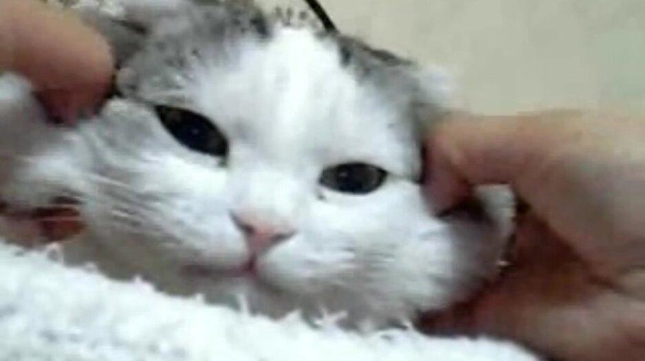 Кот морской ёж. Видео прикол