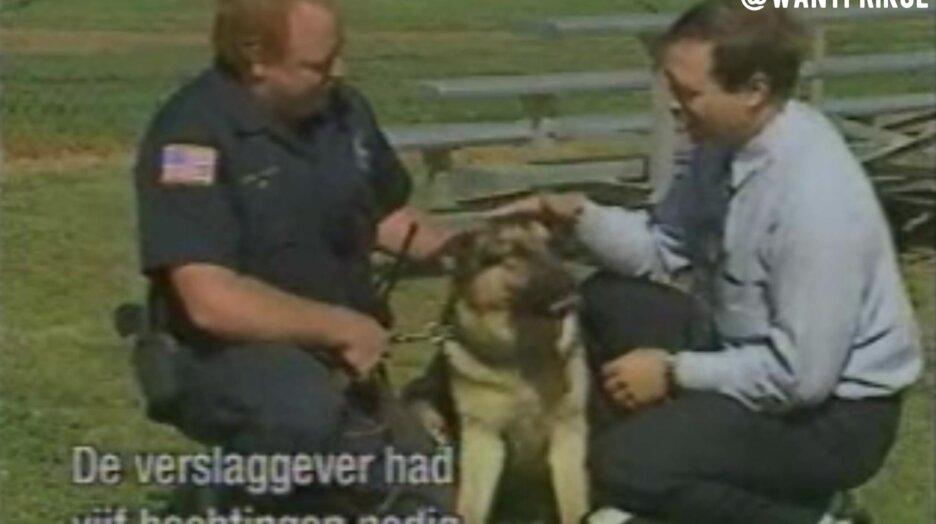 Погладил полицейскую собаку. Видео прикол