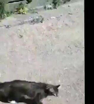 Агрессивный кот. Видео прикол