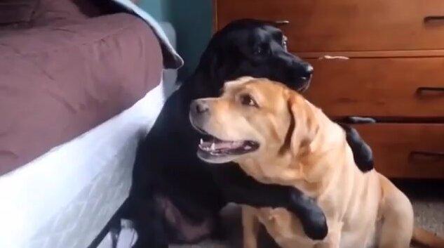 Собачьи обнимашки. Видео прикол