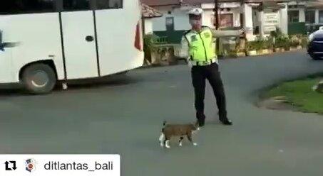 Полицейский помогает коту перейти дорогу. Видео прикол