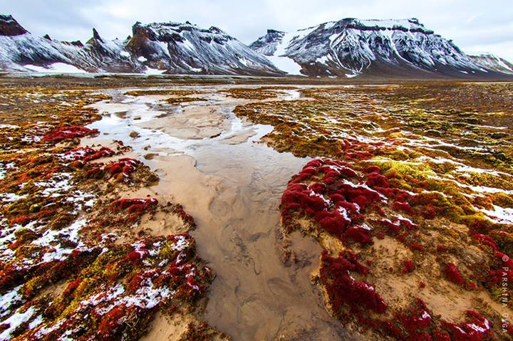 Арктический ручей