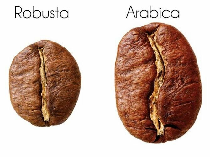 Types of coffee and their description 2