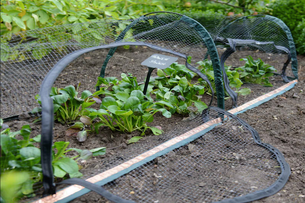 Фото: https://www.harrodhorticultural.com/uploads/images/products/GNE-377_Popadome_Crop_Protection_Tunnel_1.jpg