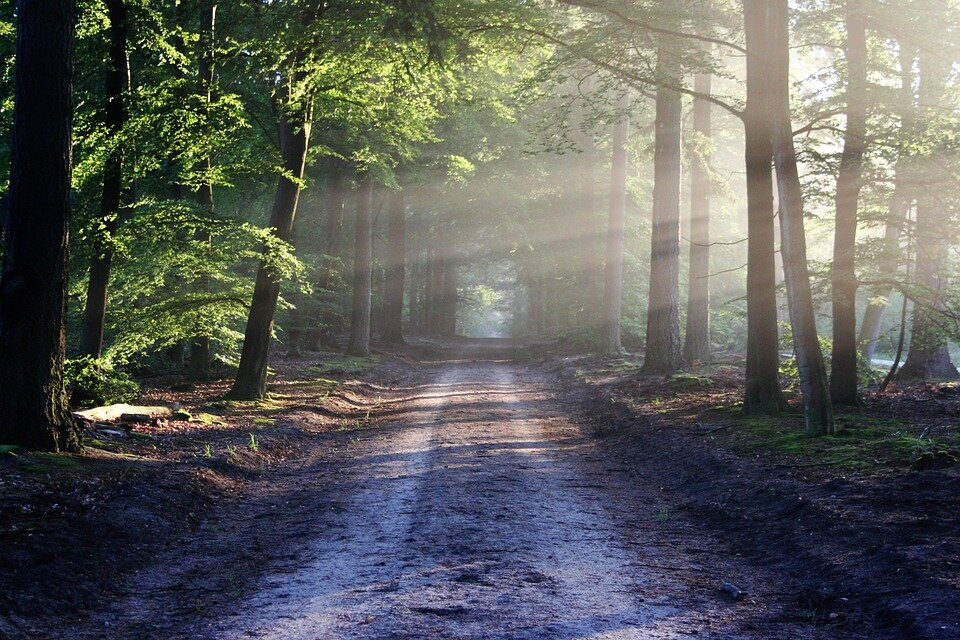 https://pixabay.com/photos/the-road-beams-path-forest-nature-815297/