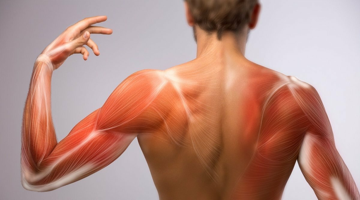 Фото: https://cdn.shopify.com/s/files/1/0012/1906/7965/articles/delayed-onset-muscle-soreness-676110_1200x.jpg