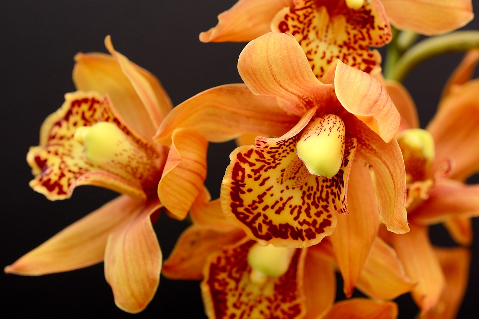 https://pixabay.com/photos/orchid-orange-blossom-bloom-flower-3778816/