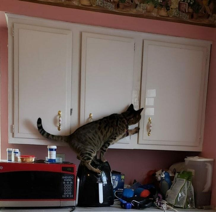 Источник:https://www.reddit.com/r/AnimalsBeingJerks/comments/eslyua/i_have_to_tape_the_cabinet_shut_to_keep_her_out/
