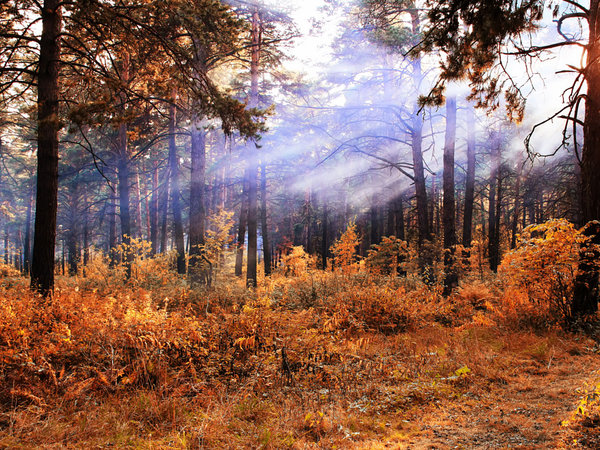 1. Indian summer in a pine forest, автор — Nick Patrin на 500px.com