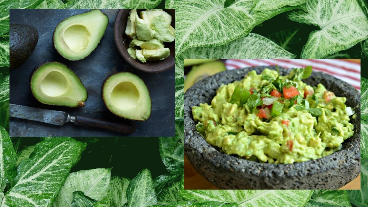 Superfood avocado: what's the use and what is it?