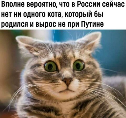 кот при Путине.jpg