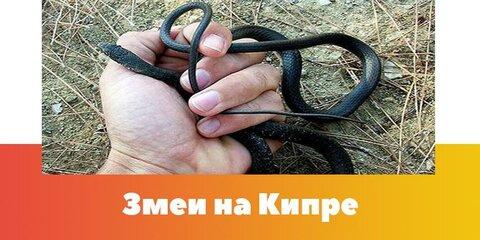 Змеи Кипра.jpg