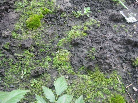 мох на почве.jpg