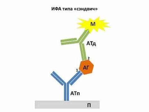 https://imageup.ru/img258/3628180/ifa2.jpg