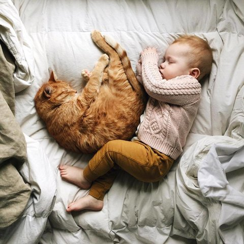 baby-bed-cat-sleep-Favim.com-3902114.jpg