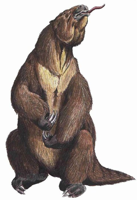 ленивец.jpg