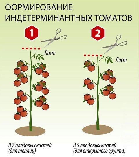 https://moyasotka.com/wp-content/uploads/2019/04/Pasynkovanie-indeterminantnyh-tomatov-min.jpg