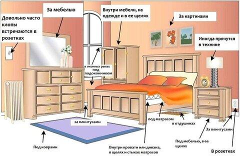 kak-izbabitsya-ot-klopov-v-kvartire-4.jpg
