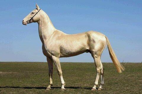horse-izobel-05.jpg