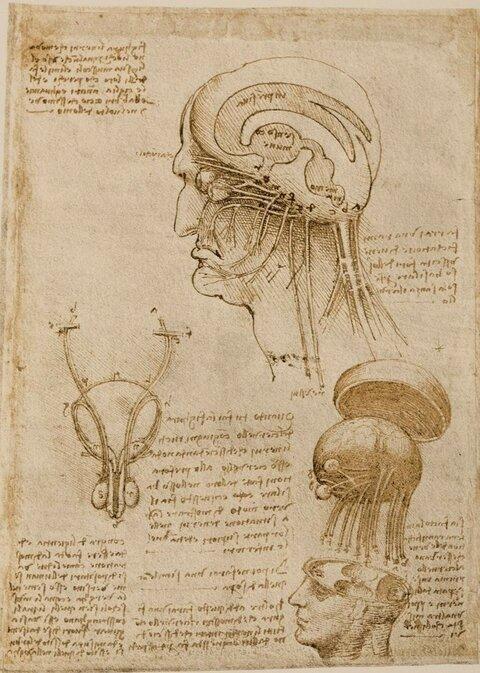 Leonardo-da-Vinci-Composite-Rendition-of-the-Brain-and-Cranial-Nerves-Weimar-verso-ca.jpg