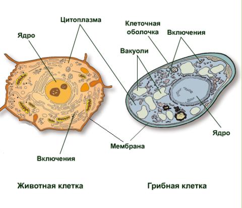 image2-800x600.png