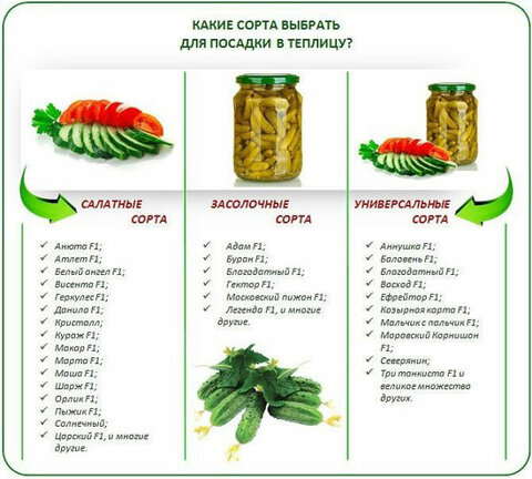 salatnye-sorta-neprigodny-dlya-zimnego-hraneniya-o-600x540.jpg