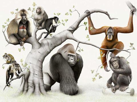 Плотоядные обезьяны