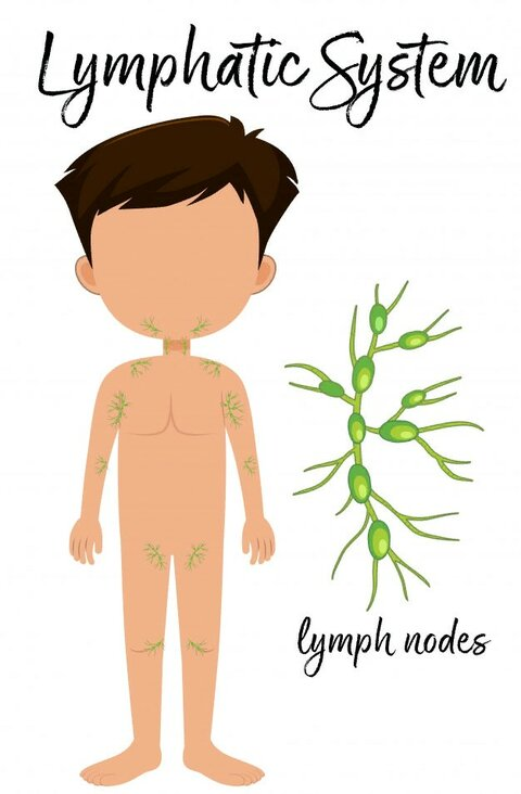 boy-with-placement-lymphatic-system_1639-4150.jpg