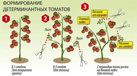 https://moyasotka.com/wp-content/uploads/2019/04/Pasynkovanie-determinantnyh-tomatov.jpg