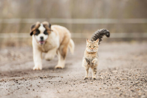 cat_runs_away_from-dog.jpg