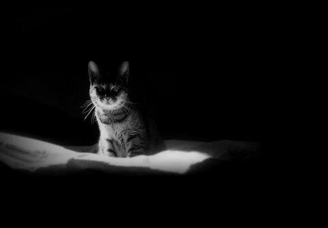 Кошки видят призраков