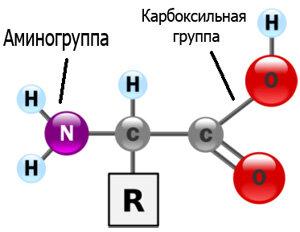 Картинки по запросу аминокислоты