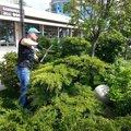 Организация работ по обслуживанию территории зелёных насаждений