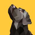 Школа дрессировки United Dogs, Другое в Санкт-Петербурге и Ленинградской области