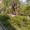 Спил, обрезка, кронирование деревьев
