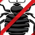 Охотники за клопами, Уничтожение тараканов в Хотьково