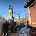Валка деревьев с земли
